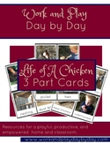 Life Cycle of A Chicken Montessori 3 Part Cards