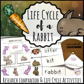 Life Cycle of A Rabbit and Research Companion.