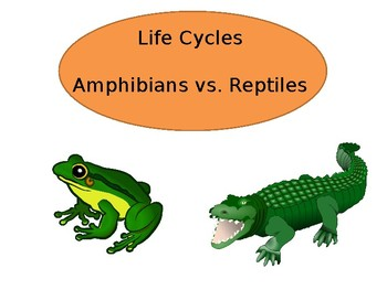 Life Cycle of Amphibians vs. Reptiles