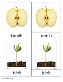 Life Cycle of An Apple Bahasa Indonesia (Fase Hidup Apel)