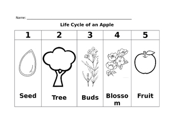Life Cycle of an Apple - Chart