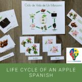 Life Cycle of An Apple Tree Spanish (Montessori)