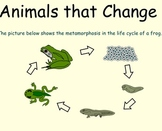Life Cycle of Animals - Smartboard Lesson