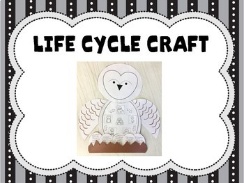 Life Cycle of Barn Owls: Li... by Little Owl's Teacher ...