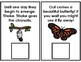 Life Cycle of Butterflies Adapted Book