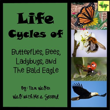 Life Cycle of Butterfly, Bee, Ladybug, and the Bald Eagle for K-2