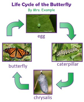 Life Cycle of Butterfly Technology Lesson Plan & Materials