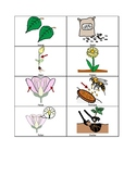 Life  Cycle of Florida Plants Picture Cards