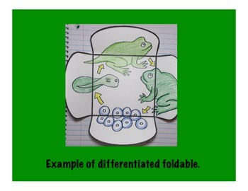 Life Cycle of Frog Science Interactive 4-Square Foldable