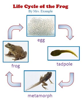 Life Cycle of Frog Technology Lesson Plan & Materials
