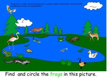 Life Cycle of Frog for the young student