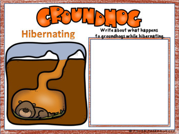 Life Cycle of Groundhogs Research Project in Google Slides™
