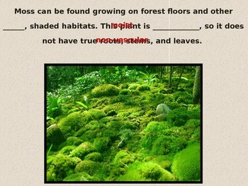 Life Cycle of Moss Powerpoint