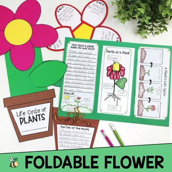 Life Cycle of Plants (20 Activities, Labs, Printables & Foldable Flower Book)