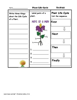 Life Cycle of Plants – 33 Activities, Puzzles, Flash Cards, Charts, Tri-Folds