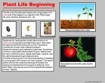 Life Cycle of Plants- A Third Grade PowerPoint Introduction