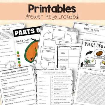 Life Cycle of Plants : Printables, Interactive Activities, Editable PowerPoint