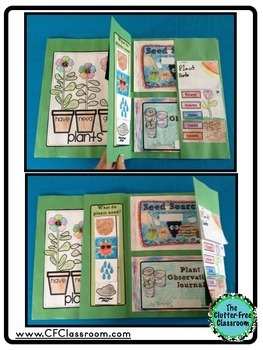 Plants Life Cycle of Plants Projects and Activities