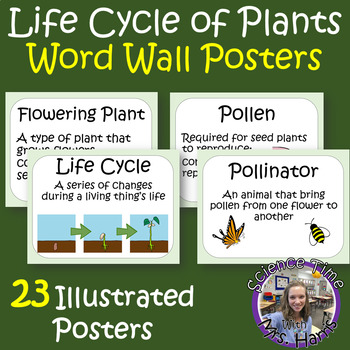 Life Cycle of Plants Word Wall Posters READY TO PRINT