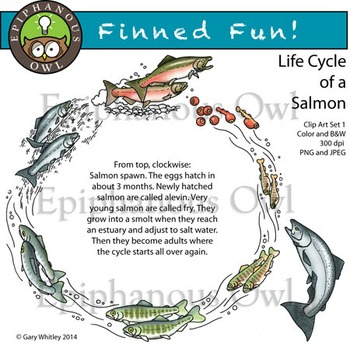 Life Cycle of Salmon Clip Art