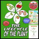 Life Cycle of The Plant
