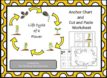 Life Cycle of a Flower Anchor Chart and Worksheet