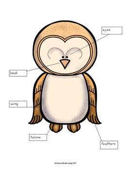 Life Cycle of a Barn Owl