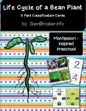 Life Cycle of a Bean Plant | 3 Part Cards PreK | English