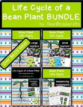 Life Cycle of a Bean Plant   BUNDLE   English {SAVE20%}