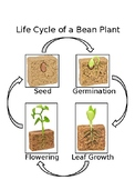 Life Cycle of a Bean Plant Control Chart