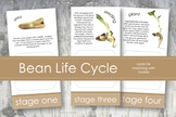 Life Cycle of a Bean Plant; Montessori matching activity f