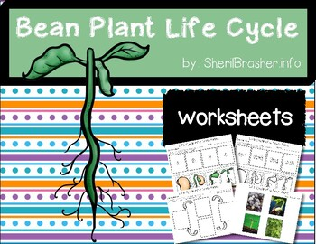 Life Cycle of a Bean Plant | PreK-K Worksheets | English