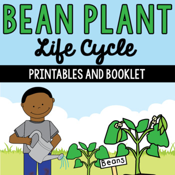 Life Cycle of a Bean Plant Printables