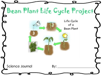 Life Cycle of a Bean Plant Project