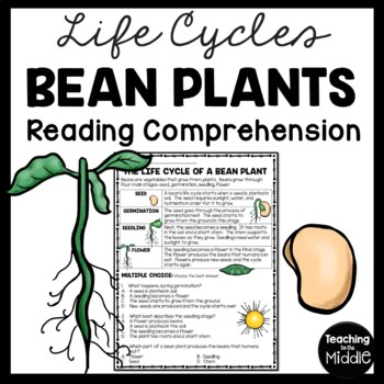 Life Cycle of a Bean Plant Reading Comprehension Worksheet