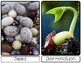 Life Cycle of a Bean Plant | Sm Posters | English