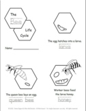 Life Cycle of a Bee - Montessori Style