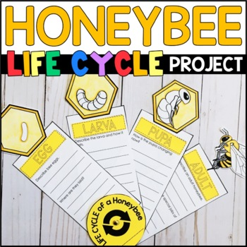 Life Cycle of a Bee: Fact Fan