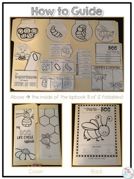 Life Cycle of a Bee Lapbook {with 12 foldables} Honeybee Life Cycle INB