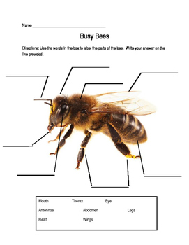 Life Cycle of a Bee Test