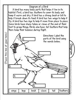 Bird Life Cycle Tab Booklet