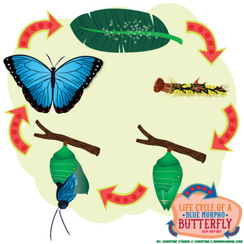 Life Cycle of a (Blue Morpho) Butterfly Clip Art Set