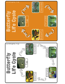 Life Cycle of a Butterfly | 3 Part Cards PreK | English