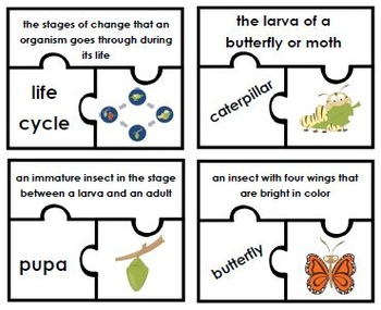 Life Cycle of a Butterfly Activity Bundle