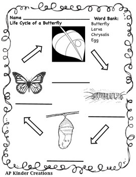 Life Cycle of a Butterfly & Butterfly Printables