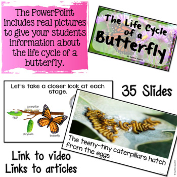 Life Cycle of a Butterfly Craftivity!