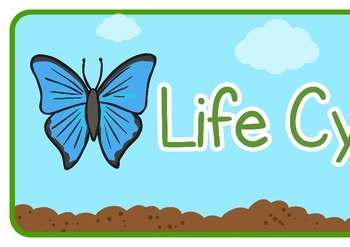 Life Cycle of a Butterfly Display Banner