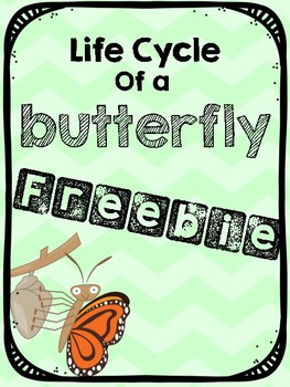 Life Cycle of a Butterfly Freebie