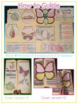 Life Cycle of a Butterfly Lapbook {with 12 foldables} Butterfly Life Cycle INB