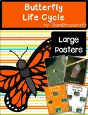 Life Cycle of a Butterfly | Lg Posters | English